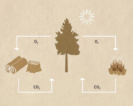 In Holz steckt Sonnenenergie - wer mit Holz heizt, heizt klimaneutral.