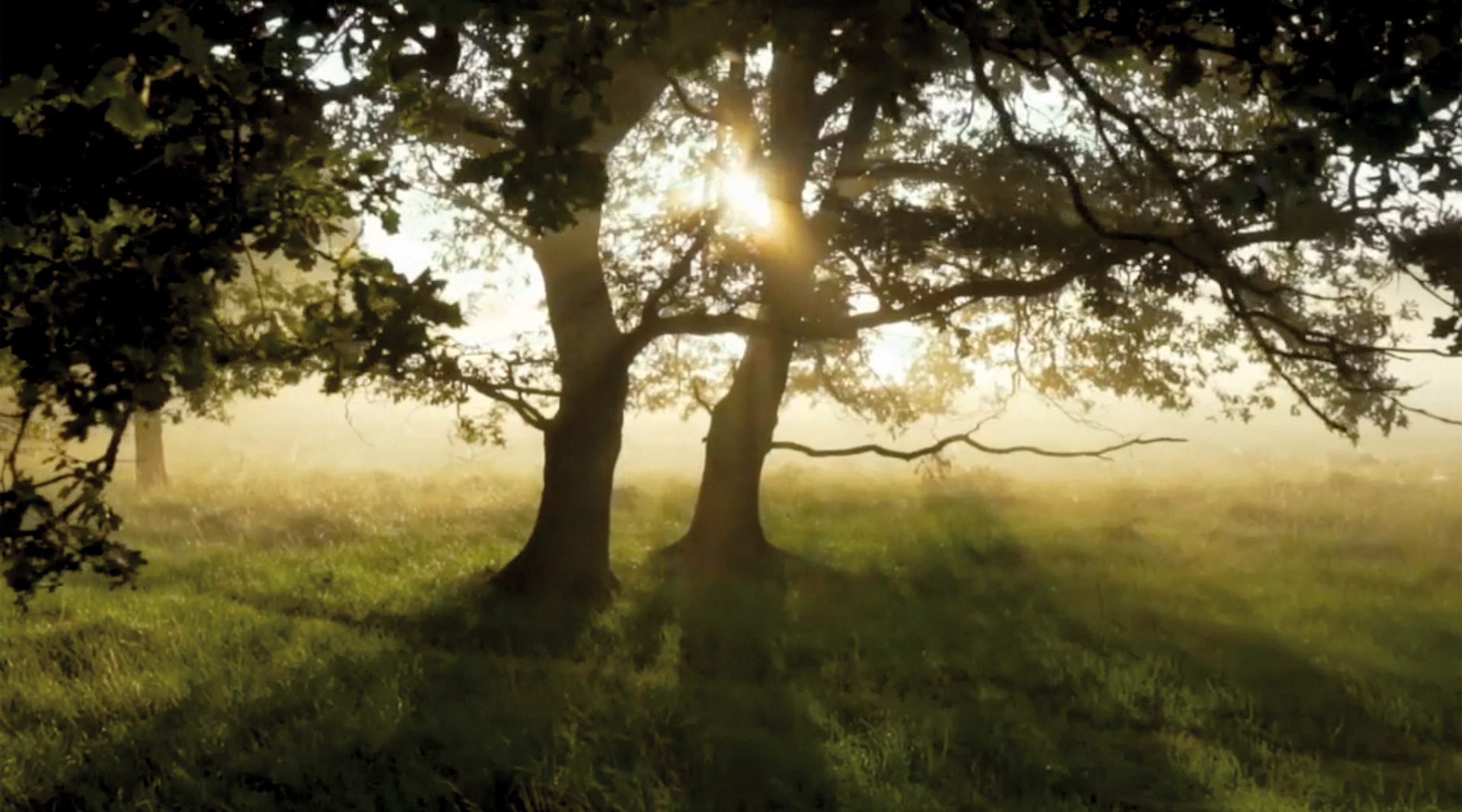 """Der Film """"Die Wahrheit über Kachelöfen"""" beleuchtet viele Bereiche zum Thema Heizen mit Holz."""